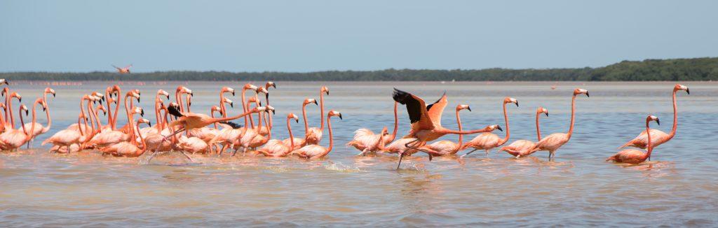 celestun_mexico_flamingos